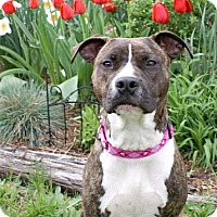 Adopt A Pet :: Ruby - Framingham, MA