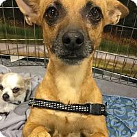 Adopt A Pet :: Jobe - Oakland, FL