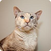 Adopt A Pet :: Cricket - Mission Hills, CA