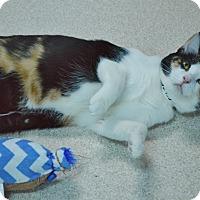 Adopt A Pet :: Montana - Evansville, IN