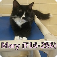 Adopt A Pet :: Mary - Tiffin, OH