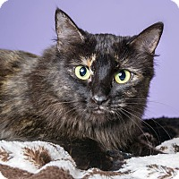 Adopt A Pet :: Maggie - Apache Junction, AZ