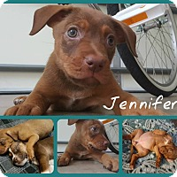 Adopt A Pet :: Jennifer - Burlington, NC