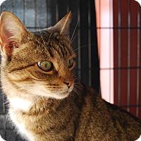 Adopt A Pet :: Rosie (TD) - Exton, PA