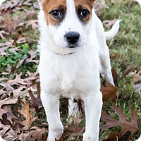 Adopt A Pet :: Adam Driver - Jersey City, NJ
