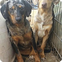 Adopt A Pet :: Snickers and Doodle - Tuttle, OK
