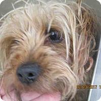 Adopt A Pet :: A421942 - San Antonio, TX