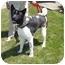 Photo 1 - Akita Dog for adoption in Hayward, California - Yuukan