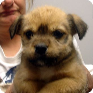 Terrier (Unknown Type, Small)/Terrier (Unknown Type, Small) Mix Puppy for adoption in baltimore, Maryland - Nicki