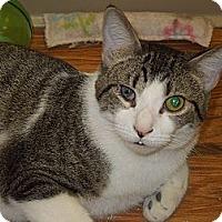 Adopt A Pet :: Felix - Medina, OH