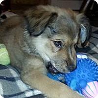 Adopt A Pet :: Gale - New Boston, NH