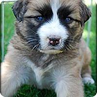 Adopt A Pet :: GOOSE - Torrance, CA