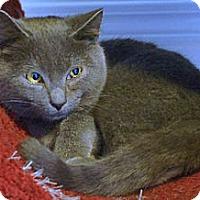 Adopt A Pet :: Jupiter - Victor, NY