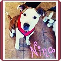 Adopt A Pet :: Nina - Dallas, PA