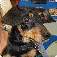 Adopt A Pet :: Rocco - Kingwood, TX
