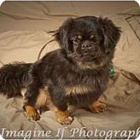 Adopt A Pet :: Chloe - Hales Corners, WI