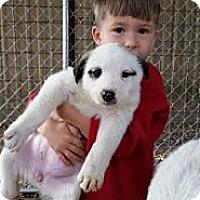 Adopt A Pet :: Panda - Stafford Springs, CT