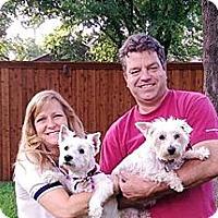 Adopt A Pet :: Keri Adopted - Carrollton, TX