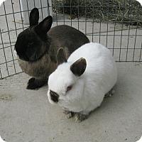 Adopt A Pet :: Smokey & Ruby - Bonita, CA