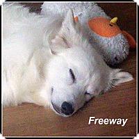Adopt A Pet :: Freeway - Elmhurst, IL
