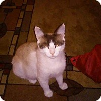 Adopt A Pet :: Aleigha - Trevose, PA