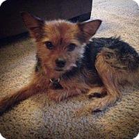 Adopt A Pet :: Jurni - Colorado Springs, CO