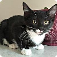 Adopt A Pet :: Kris - McHenry, IL