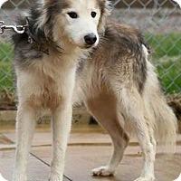 Adopt A Pet :: Galt - Zanesville, OH