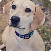 Adopt A Pet :: Lady Bug 816 - Loxahatchee, FL