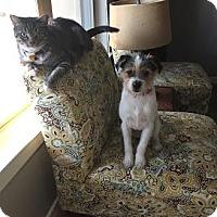 Adopt A Pet :: Linus - San Antonio, TX