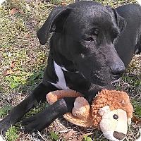 Adopt A Pet :: Jet - St Petersburg, FL