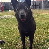 Adopt A Pet :: Daphne - Bedford, TX