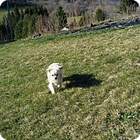 Adopt A Pet :: Mikey - Elkins, WV