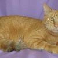 Adopt A Pet :: Tango - Powell, OH