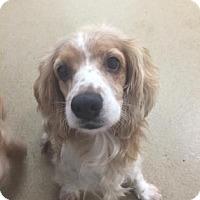 Adopt A Pet :: Sofy - Miami, FL
