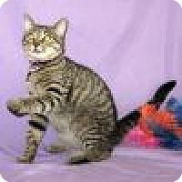 Adopt A Pet :: Calvin - Powell, OH