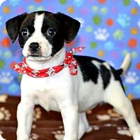 Adopt A Pet :: Freckles - Okeechobee, FL