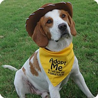 Brittany/Hound (Unknown Type) Mix Dog for adoption in St Louis, Missouri - OK/Daniel