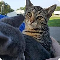 Adopt A Pet :: Ana - Florence, KY