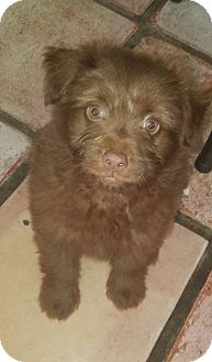 Terrier (Unknown Type, Medium) Mix Puppy for adoption in Ft. Lauderdale, Florida - Baxter