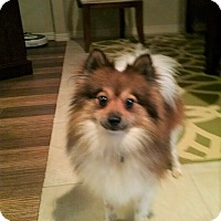 Adopt A Pet :: Dyson - conroe, TX