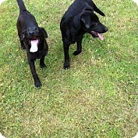 Adopt A Pet :: Jill - Lewisville, IN