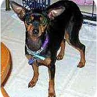 Adopt A Pet :: Tina - Florissant, MO