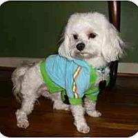 Adopt A Pet :: Nicholas - Mooy, AL
