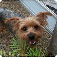 Adopt A Pet :: Jackie-O - Gulfport, FL