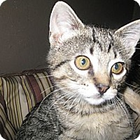Adopt A Pet :: McMuffin - Clearfield, UT
