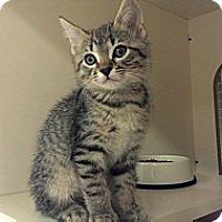 Adopt A Pet :: Miggy - Stafford, VA
