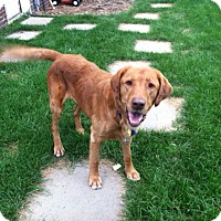 Adopt A Pet :: Sam - Denver, CO