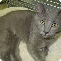 Adopt A Pet :: Scarlett - Medina, OH