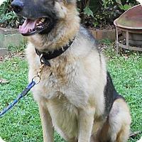 Adopt A Pet :: Aslan - Dacula, GA